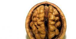 Neuroscienze ed apprendimento: 4 miti sfatati